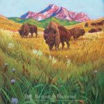 Buffalo Roam - Wall Art