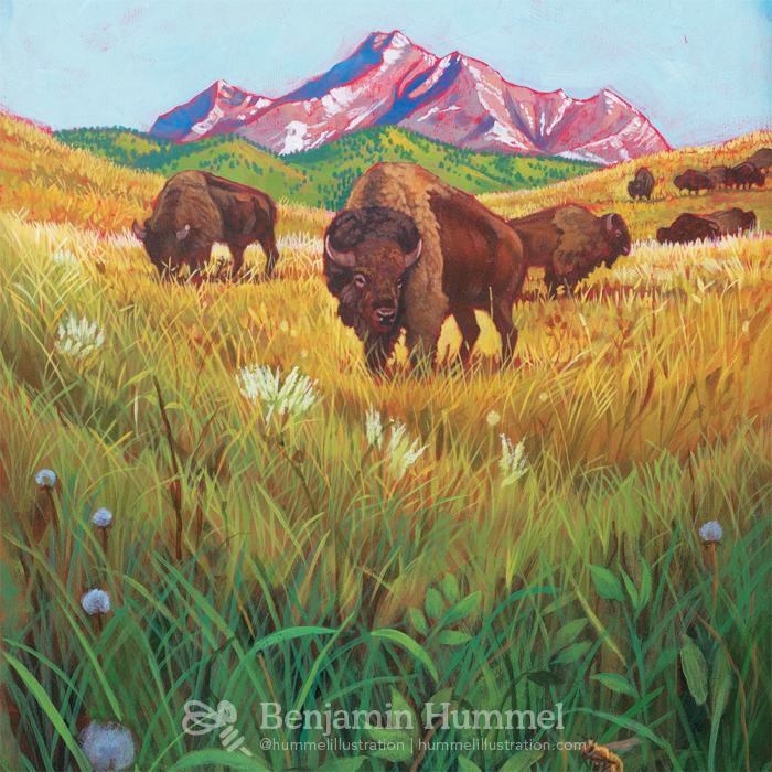 Buffalo Roam - Wall Art